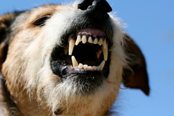 Dog Bite Injury Lawyers | Dog bite laws Ontario